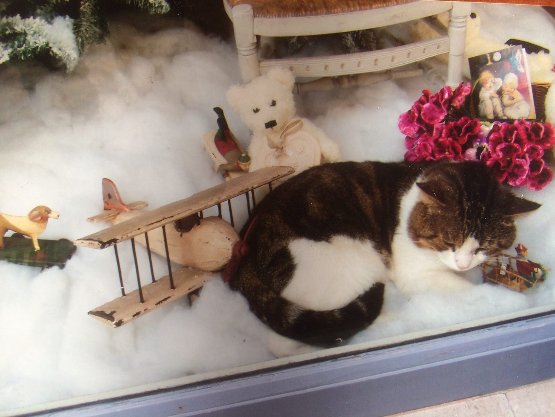 O gato de Biarritz, pelo et(h)eriano Rui Azeredo